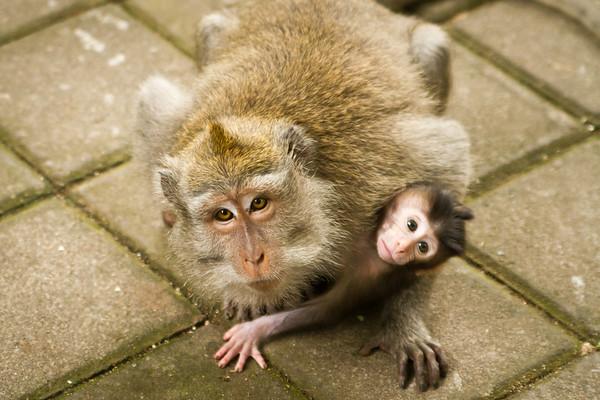 Curious Monkeys