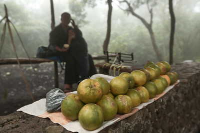 Citrus Delicacy