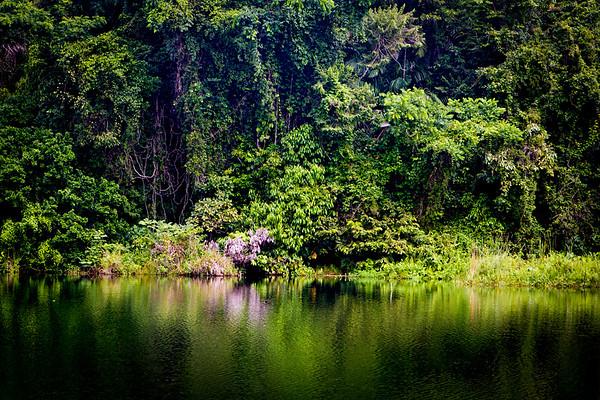 { green paradise }