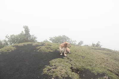 A dog at the top of the volcano