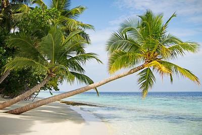 { deserted island }
