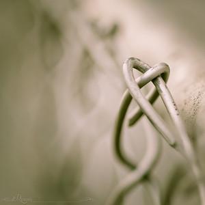 love fences...