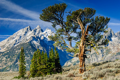 Old Patriarch, Grand Teton National Park, Wyoming