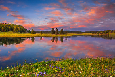 While driving back from Hayden Valley, came across beautiful reflection of clouds in the yellowstone river during sunset! Looked for some interesting foreground, and there it was ..the wildflowers!! People often throng to the Hayden Valley overlook and this gem seems to go unnoticed.