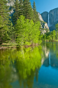 Early light on the Merced River with Yosemite Falls in the background