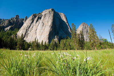 Cathedral Rock with flowers in the meadow
