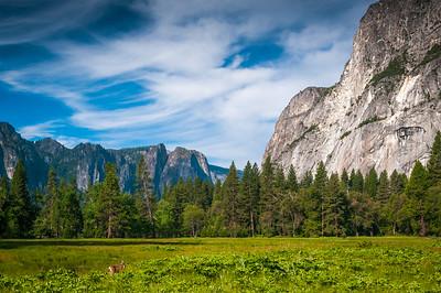 Cook's Meadow Looking West