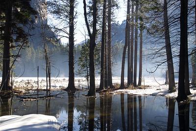 Misty Morning at Yosemite