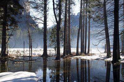 Misty Morning at Yosemite