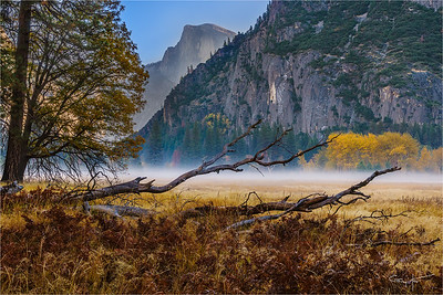 Autumn Morning, Leidig Meadow, Yosemite