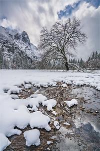Elm in Winter, Cook's Meadow, Yosemite