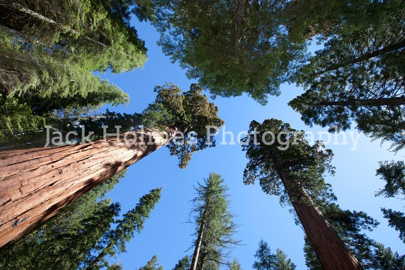 Yosemite_May2011-48