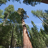 Yosemite_May2011-47
