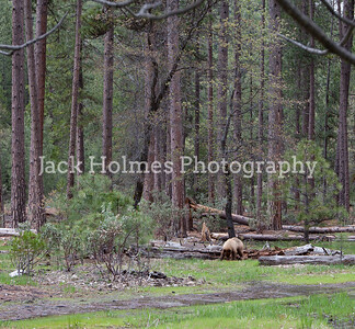 Yosemite_May2011-10