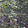Yosemite_May2011-66