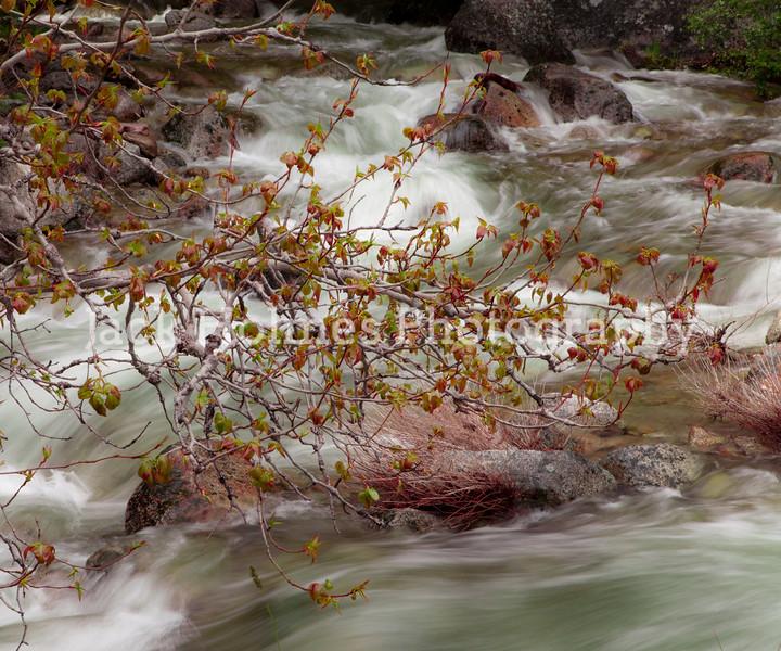 Yosemite_May2011-13