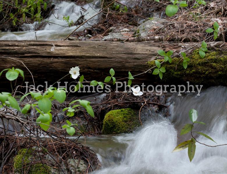 Yosemite_May2011-12