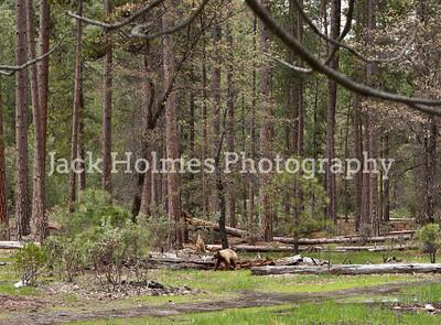 Yosemite_May2011-9