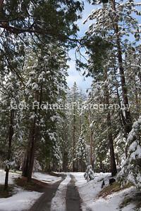 Yosemite_May2011-28