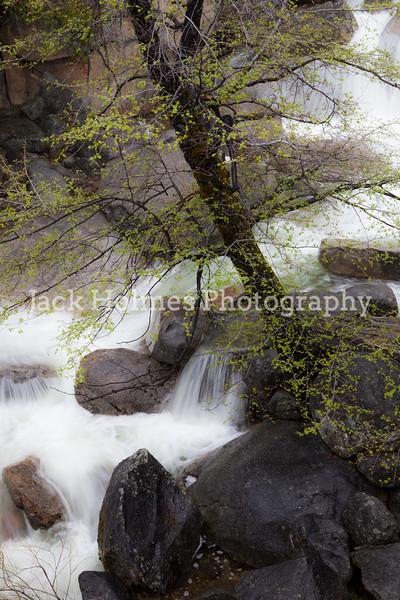 Yosemite_May2011-17