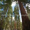 Yosemite_May2011-57