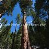 Yosemite_May2011-54