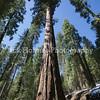 Yosemite_May2011-49