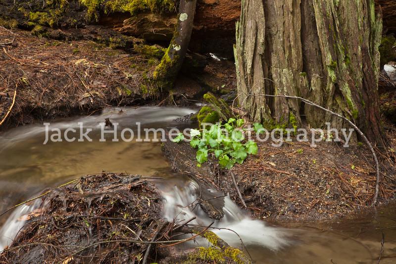 Yosemite_May2011-23
