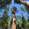 Yosemite_May2011-51