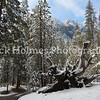 Yosemite_May2011-26