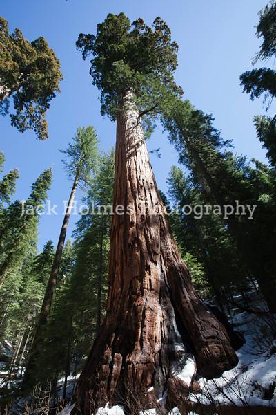 Yosemite_May2011-50