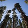 Yosemite_May2011-52