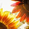 Sun Gears