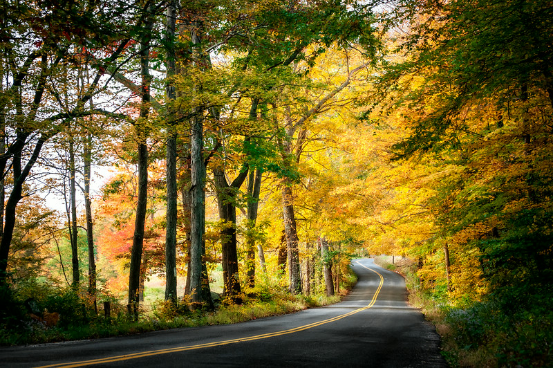 In the spring and in the fall I drive a slightly longer route on my way into work on campus so that I can drive on this road.  The way the trees make a canopy over the road is really beautiful, especially when all of the leaves change colors in the fall!