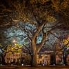 Iphone Trees