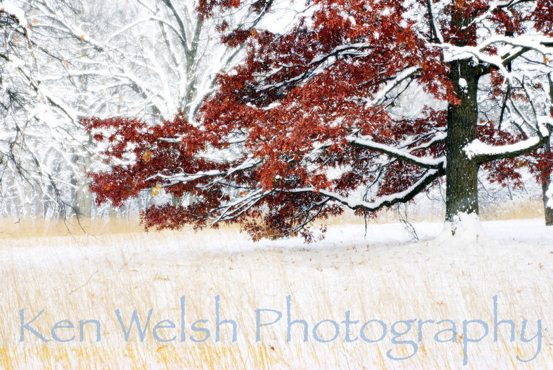 """""""Red Against the Snow"""""""