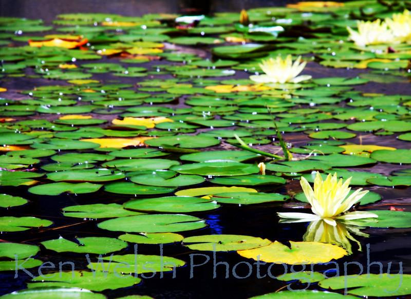 """The Pond"""