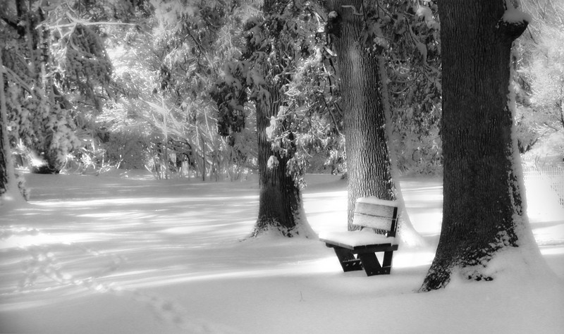 A Quiet Place