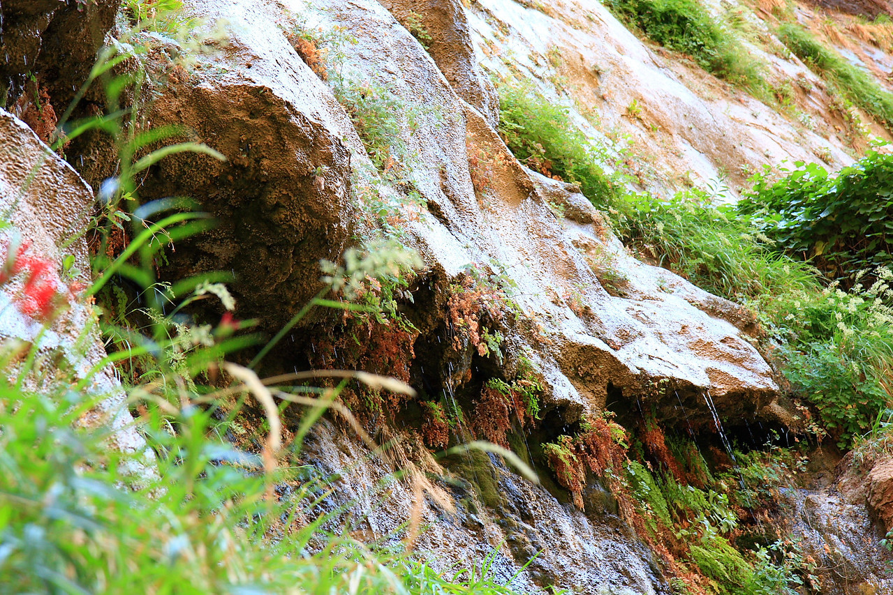 Water dripping from the rocks. This is not rain water. It is a perennial source of water flowing through rock slot and eventually finds its way out. Much of the water does not get absorbed because of the impermeable nature of the rocks. However, the moisture helps the growth of hanging gardens.