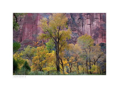 Zion Canyon In the Fall  - 2013