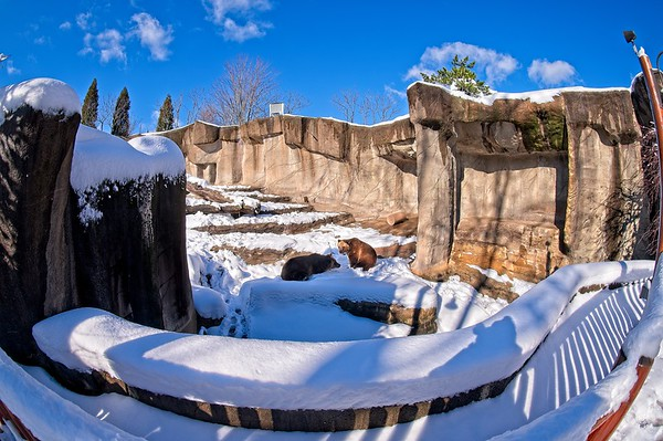 A Winter Day at the Cleveland Metroparks Zoo