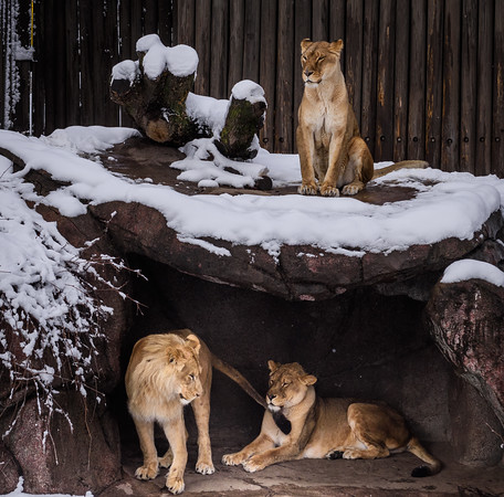 A snowy April day at the zoo