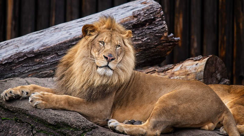 Cleveland Metroparks Zoo 2019