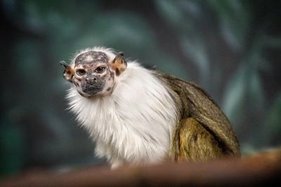 Cleveland Metroparks Zoo Rainforest