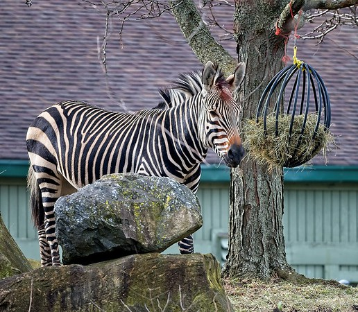 Cleveland Metroparks Zoo 2020
