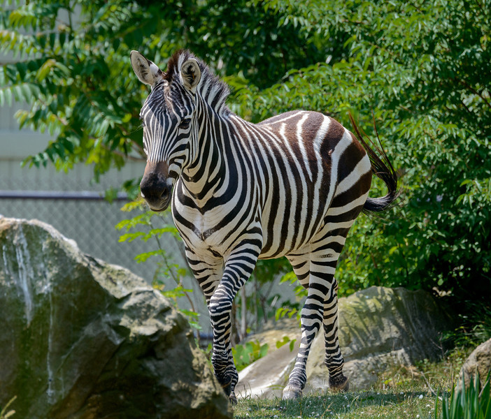 Fun at the Cleveland Metroparks Zoo