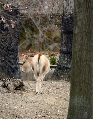 A Cold Winter Day at the Cleveland Metroparks Zoo
