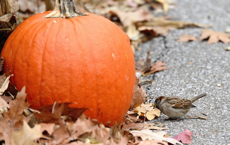 Bird and Pumpkin