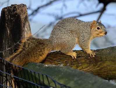 Squirrel - Cleveland Metroparks Zoo