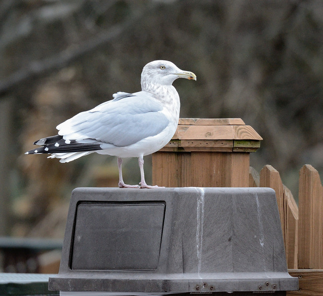 Talkin' Trash with the Gull at the Zoo